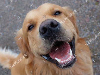 A pet happy about dental month