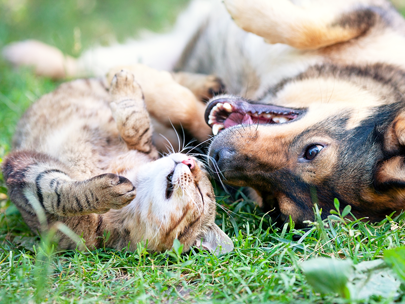 A playful cat and dog.